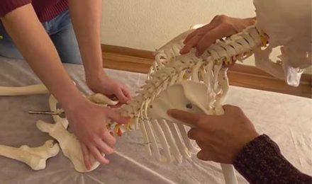columna osteopatia